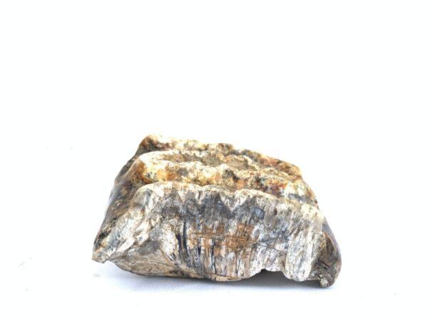 RARE Stegodon Mammoth Giant Fossil Teeth Tooth Skeleton Bone Dinosaur