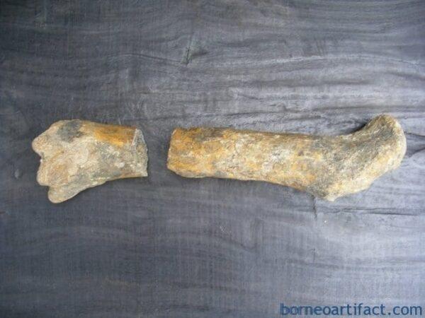 ANCIENTFOSSILmmMEGASIZEBONEStegodonNoDinosaurMegalodonFossilsRelic