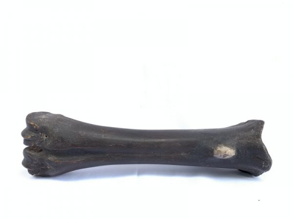 Jaw Bone Tribal Axe, KAPAK JAWA 250mm JAW BONE TRIBAL AXE AX AXES WEAPON Hindu Stone Blade Knife
