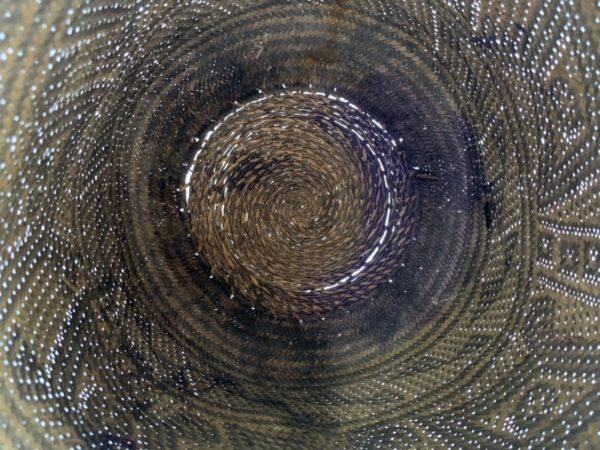 AUTHENTIC OLD BASKET (Large 250mm) Traditional Borneo Weaving Woven Fiber Art Rattan Bag #3